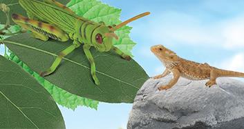 Insekten & Reptilien