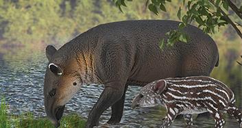 Wild- und Waldtiere